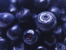 Blueberry Close Stock Photos