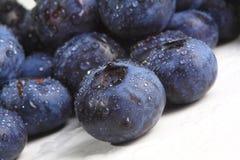 Blueberry closeup Stock Photos