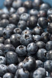 Blueberry closeup background Stock Photos