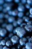 Blueberry closeup Stock Photography