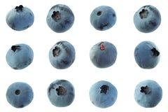 Blueberry  closeup on white Royalty Free Stock Photos
