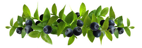 Blueberry_composition Royalty Free Stock Photography