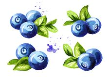 Blueberry compositions set. Fresh berries with leaves. Hand drawn watercolor illustration isolated on white background. Blueberry compositions set. Fresh stock illustration