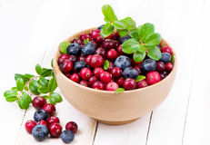 Blueberry and cowberry with green leaflets Stock Images
