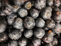 The blueberry crowd stock photography