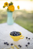 Blueberry cup Stock Images