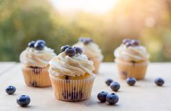 Blueberry cupcake on the table on a summer day Stock Images