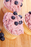 Blueberry cupcakes Royalty Free Stock Photography