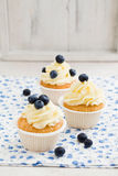 Blueberry cupcakes. Cupcakes with vanilla buttercream swirl and blueberries stock image