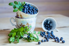 Blueberry in cups, still life on light background Stock Photos