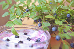 Blueberry dessert. Still life with butter cream with berries and sprigs of blueberries Royalty Free Stock Photos