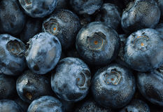 Blueberry detail background Royalty Free Stock Photography