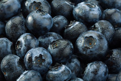 Blueberry detail background Royalty Free Stock Image