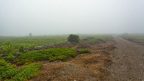 Blueberry fields with road in dense fog Stock Image