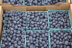 Blueberry Flats for Sale. Fresh blueberries in pint containers for sale at an outdoor farmers market Royalty Free Stock Photography