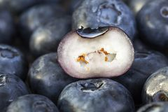 Blueberry flesh. Flesh blueberry berries, whole and cut in the kitchen royalty free stock photos
