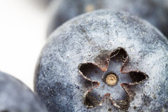 Blueberry (focus inside the flower) Stock Photography