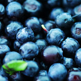 Blueberry food background close up. Macro photo royalty free stock images