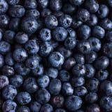 Blueberry food background. square image Stock Image