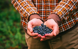 Blueberry fresh picked organic berries food in man hands Stock Photo