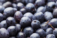 Blueberry. Fresh ripe organic blueberry background Stock Images