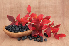 Blueberry Fruit Stock Image