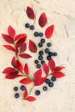 Blueberry Fruit Stock Photography