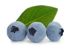 Blueberry fruit Royalty Free Stock Image