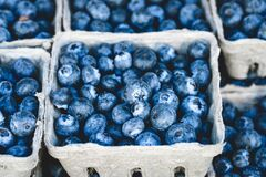 Blueberry Fruit on Gray Container Royalty Free Stock Images