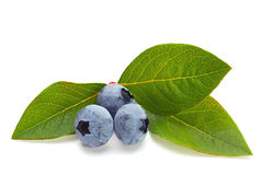 Blueberry fruit with leaf Royalty Free Stock Image