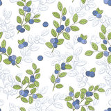 Blueberry graphic color seamless pattern sketch illustration Royalty Free Stock Photo