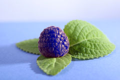 Blueberry and green leaf Stock Image