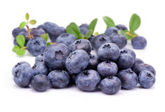 Blueberry  with green leaves Royalty Free Stock Photos