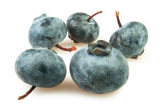 Blueberry group Royalty Free Stock Photo