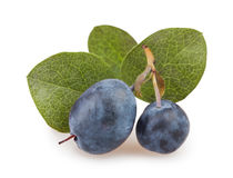 Blueberry group leaves Stock Images