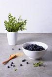Blueberry harvest, fresh bilberries in a white bowl over grey background. Close up Stock Images