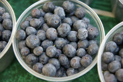Blueberry, Highbush blueberry Royalty Free Stock Images