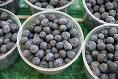 Blueberry, Highbush blueberry Stock Image
