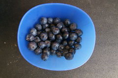 Blueberry, Highbush blueberry Stock Photo