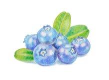 Blueberry illustration Stock Photo