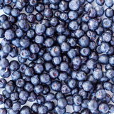 Blueberry isolated top view, closeup Stock Images