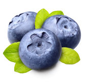 Blueberry isolated Royalty Free Stock Photos