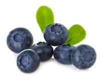 Blueberry isolated on white Stock Photos