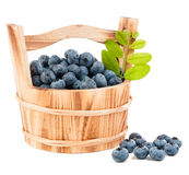Blueberry isolated. On white background Stock Photos
