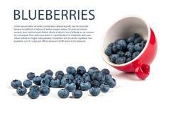 Blueberry isolated. On white background Stock Photo