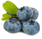 Blueberry isolated Stock Photo