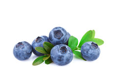 Blueberry Isolated on White Royalty Free Stock Photography