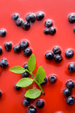 Blueberry juice Royalty Free Stock Photos
