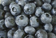 Blueberry. Large and ripe blueberry.Shot close-up,  natural lighting.Food background Stock Image