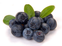Blueberry with leaves Stock Photography